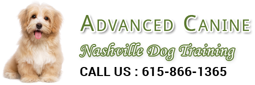 Advanced Canine Nashville